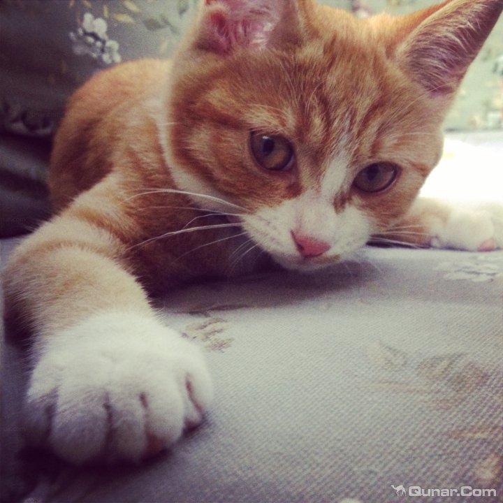小猫懒床的可爱图片