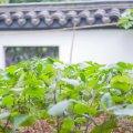 花筑•杭州隐鸬山居民宿