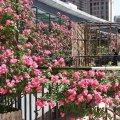 宁波蔷薇酒店
