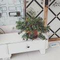 海北伊俗公寓(七一路分店)